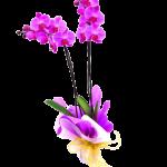 Orquideas estilo