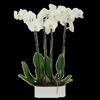 Orquideas Online