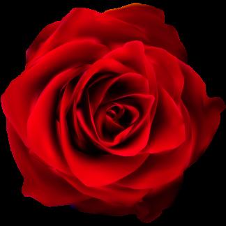 Rosa roja preservada