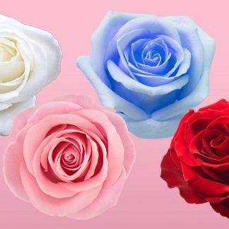 Rosas a la carta